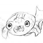 Unser Sponsor Seewasseraquatristik kümmert sich um Ihr Aquarium